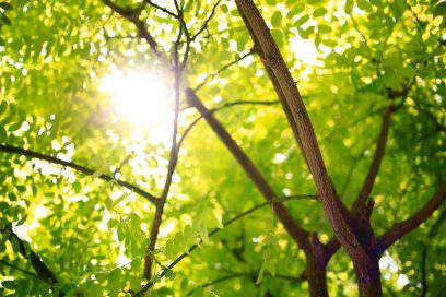 Trees and Green Spaces: Herald the Healers